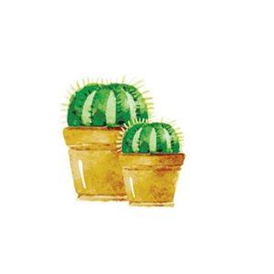 poster cactus bol