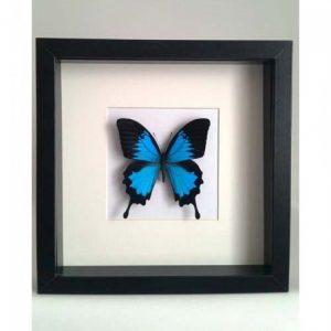 vlinder-in-lijst